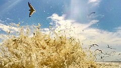 Gulls and Water (ericanderson7) Tags: gulls seagull gulfofmexico