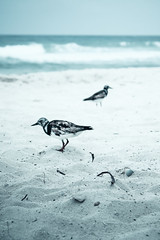 BEACH-2229 (#Js) Tags: beach sand blue green landscape island peace relaxation strand blau grün landschaft insel frieden entspannung plage sable bleu vert paysage île paix