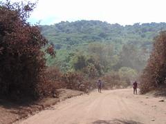 DSC00281 (francy_lioness) Tags: safari jeep animals animali ippopotami leone savana gnu elefante iena pumba tanzaniasafari ngorongorocratere gazzella antilope leonessa lioness facocero