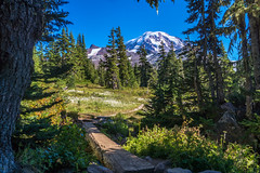 Park Entrance (writing with light 2422 (Not Pro)) Tags: bigbrownbear spraypark mountrainiernationalpark mountrainier mountain volcano stratovolcano nationalpark richborder washingtonstate sonya77 trees hikingtrail