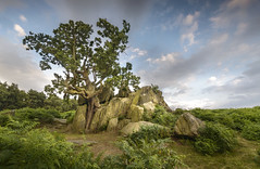 Bradgate Tree (John__Hull) Tags: countryside bradgate park newtown linford leicestershire charnwood uk england crooked ferns bracken outcrop rocky nikon d3200 sigma 1020mm clouds sky breath taking landscapes