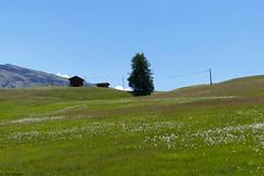 Alpe di Siusi (jehazet) Tags: alpedisiusi seiseralm dolomiti italy italië landscape landschap weide jehazet