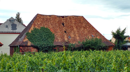Old house in a vine yard. The vine yard is in the middle of the town next to the train station.