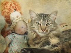 52 Still Lifes ~ historias de familia (Ani Carrington) Tags: stilllife cat tabby tabbycat pet textured 52stilllifes