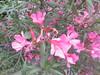 043 (en-ri) Tags: fiorellini little flowers foglie leaves sony sonysti verde