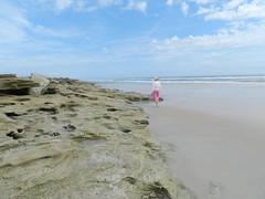 Coquina-Strewn Beach (dnborgman) Tags: coquina florida beach sand atlanticocean sea ocean beachcomber