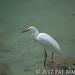 Sea Birds of Palo Alto-7368