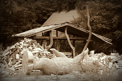 Becoming a Bear (Agne Barde) Tags: bear wood wooden carving craft sepia monochrome