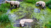 Charlie, Agnes and Purdy (Mark Rainbird) Tags: thelookout retriever ufton powershotg7xmarkii dog canon puppy uk bracknell agnes charlie purdy surreyheathdistrict england unitedkingdom gb