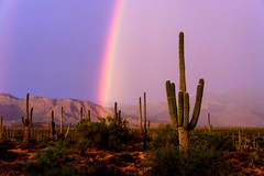 After the Storm (Plotz Photography) Tags: desert arizona az monsoon rainbow cactus saguaro sunset landscape southwest usa travel cacti mountains weather rain sonoran