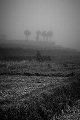 It's a Hard World (parenthesedemparenthese@yahoo.com) Tags: dem bw bali blackwandwhite champsderiz indonesia indonésie landscape man monochrome nb noiretblanc ricefield silhouette trees arbres beef boeuf brouillard byn canoneos600d day dehors ef50mmf18ii farmer fermier fog homme jourdepluie journée juillet july loneliness outdoor pluie rain rainingday seul solitude summer été