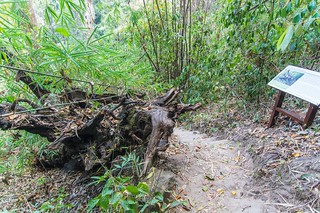 doi suthep pui chiang mai - thailande 56