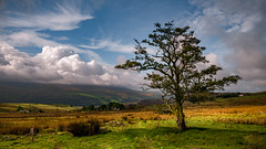 The open land ..... (Einir Wyn Leigh) Tags: landscape tree autumn wales nikon sigma colorful clouuds sky sunlight sunny green fields farming mountains outdoors light beauty nature cymru