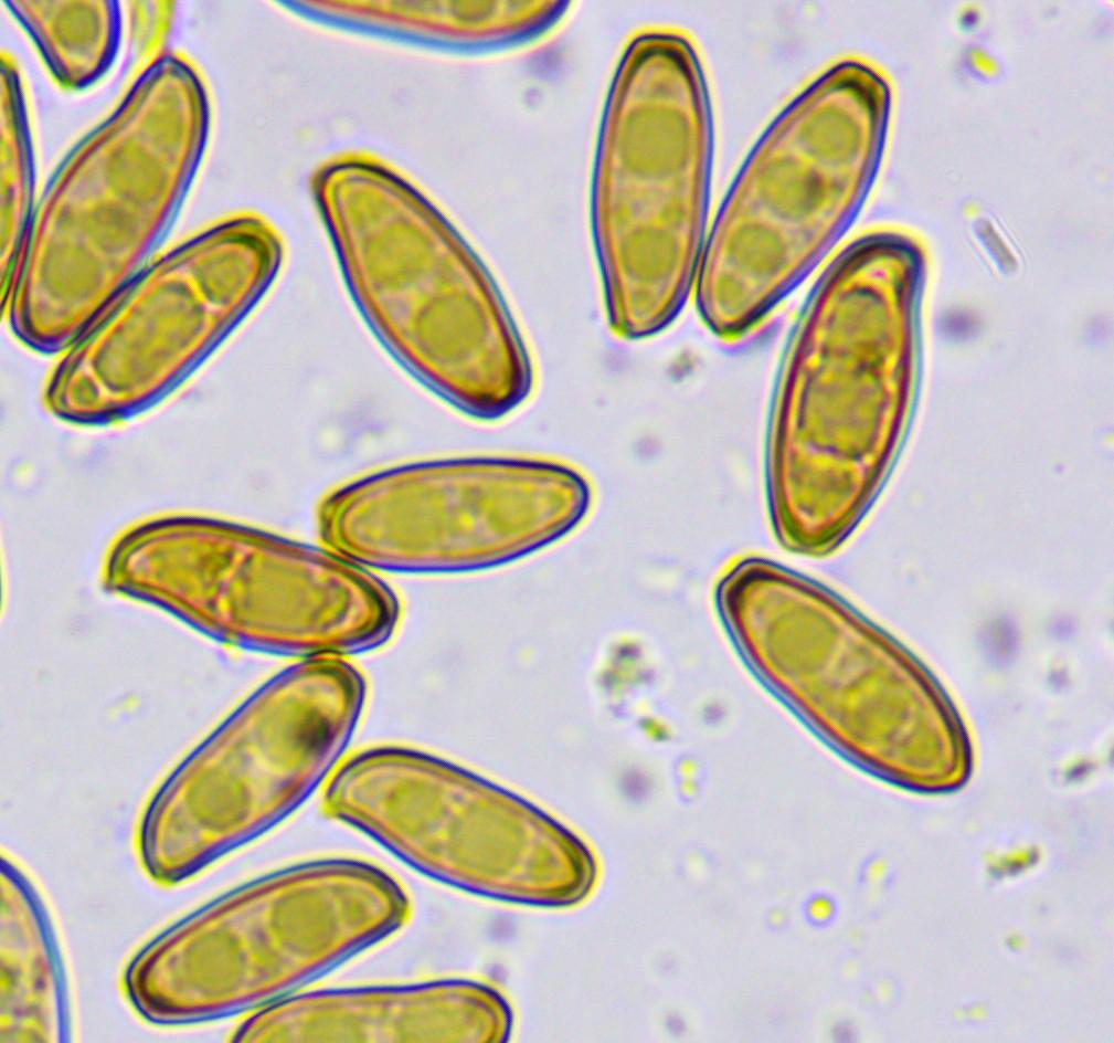 The World's newest photos of taxonomy:kingdom=fungi ...