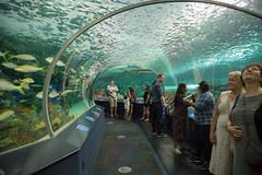 4X1A2252-10 (RachaelBarbash) Tags: toronto canada torontoisland island ripleysaquarium ripleys aquarium jellyfish