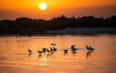 Good Morning (Italian_Dreamer) Tags: landscape colour bird sun sunrise armona portugal waterscape water
