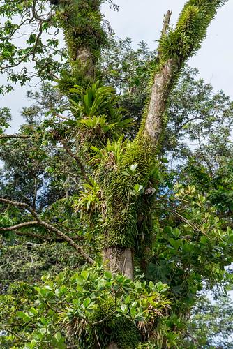 Waitukubuli National Park, Dominica