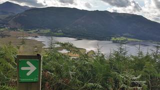 Bassenthwaite Lake from Dodd Wood