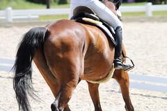 _MG_5701 (dreiwn) Tags: dressage dressurprüfung dressurreiten dressurpferd dressyr ridingarena reitturnier reiten reitverein reitsport ridingclub equestrian horse horseback horseriding horseshow pferdesport pferd pony pferde dressur dressuur tamronsp70200f28divcusd
