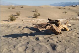 Weathered wood on Mesquite Dunes