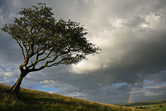 Which Way the Wind Blows (Vide Cor Meum Images) Tags: mac010665yahoocouk markcoleman markandrewcoleman videcormeumimages vide cor meum nikon d750 colne lancashire trawden tree windswept england english rainbow hills weather rain clouds pendle