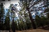 Forest Flight (philbeckman56) Tags: california bigbear mountainbike bicycle freestyle wideangle sports action canon