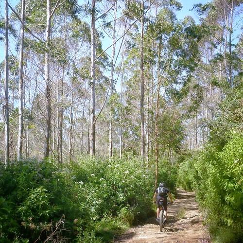 Offroad trail past Palintang Peak