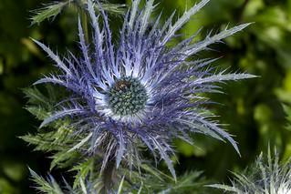 Prickly or Soft? - _TNY_1175