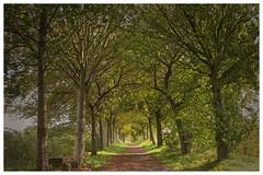 Zwischen zwei Schauern (Peter L.98) Tags: projekt365 bäume weg bank sonnenlicht grün dortmund sonya6000 natur