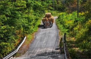 0197-  Harvest Days
