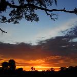 Sunset after Irma thumbnail