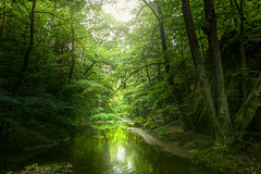 Not a stone or a tree (Petr Sýkora) Tags: skryje kameny les potok voda výlet nature trees forest outdoor time green water brook reflection light