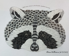 Bandit-masked Raccoon (Seventh Heaven Photography) Tags: millie marotta colouring coloring book animal kingdom raccoon project creation art polychromos pencil sonyxperiaxz1 procyonlotor banditmasked