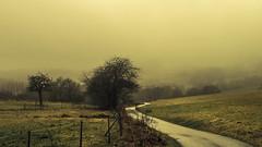 Eifel (Netsrak) Tags: baum eu europa europe forst januar january landschaft natur nebel wald fog forest landscape mist nature tree trees winter woods eifel bäume rheinbach nordrheinwestfalen deutschland de