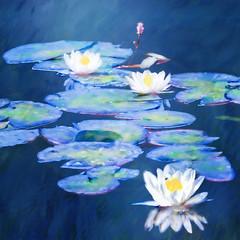 Inspired by Monet (BirgittaSjostedt) Tags: flower lily waterlily water paint texture birgittasjostedt monet inspired magicunicornverybest