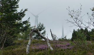 Hornisgrinde im Nebel - Black Forest fog