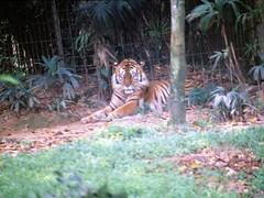 1994_Singapore_2016-07-18_Photo_188 (Matthias & Paula) Tags: singapore sentosa kuala lumpur malaysia cameron highlands zoo japanese gardens