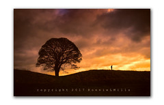 Alone Time   [Explored] (RonnieLMills) Tags: lone tree figure silhouette fiery sky clouds giants ring belvoir belfast slider sunday hss sliderssunday explore explored 070817 7 greatphotographers