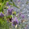 Compact Bee