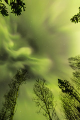 Solar Storm Vivian Lake (robertdownie) Tags: trees sky red reflection light glow lights stars green bc storm beams aurora glowing wide angle borealis northern burning solar canada british columbia pg prince george vivian lake