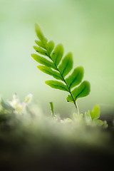 kleiner Farn / little fern (juerger69) Tags: farn fern macro bokeh dream traumhaft green