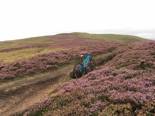 Heather and Hills: Mynydd Du Fforest