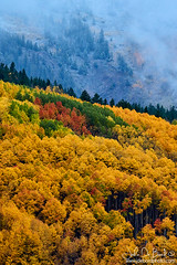 Fog And Fall In Colorado (rosacruzjl) Tags: aspen colorado crestedbutte fall gunnison keblerpass rockies rockymountains westelkmountain autumn blanket city cloud color colorful fogm forest gold green light mountain orange place red sky sunlight texture town tree weather yellow