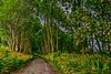Leafy Lane, Moville, Co Donegal (Eileen (EMC)) Tags: ireland moville donegal lane borheen trees trail flowers flora nikon d5300 tonemapped ulster inishown thewildatlanticway