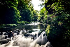 Jesmond Dene (Millerc1980) Tags: jesmonddene waterfall flowingwater water motion longexposure tree nature river forest runningwater beautyinnature nopeople outdoors scenics day tranquility growth theweekoneyeem northeast nikonphotography nikon eyeemnaturelover eyeem eyeemgallery
