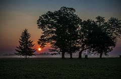 Dawn Colours (Knarr Gallery) Tags: sunset sunrise sky trees silhouette mist ontario d300 18200mmf3556gvrii topazadjust topazlabs landscape horizon knarrgallery darylknarr knarrphotography