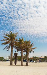 Beach fairy tale (Irina.yaNeya) Tags: sharjah uae emirates beach sand palms trees sky clouds city summer eau playa palmeras árboles arena cielo nubes ciudad verano الامارات الشارقة شاطئ رمل أشجار سماء سحاب الصيف شجرةالنخل шарджа оаэ эмираты пляж песок пальмы деревья небо облака город лето