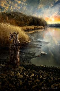Schilf Ufer Szenerie