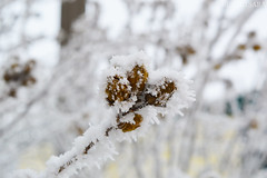 the first snow (sunsetsára) Tags: weather winter winterbeauty snow snowy ice icy tree trees fog foggy mist misty pastel white cool frozen gloomy branch branches walking walk street town city