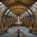 London+Natural+History+Museum+1